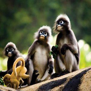Beach Weddings Abroad Thailand Weddings Monkeys